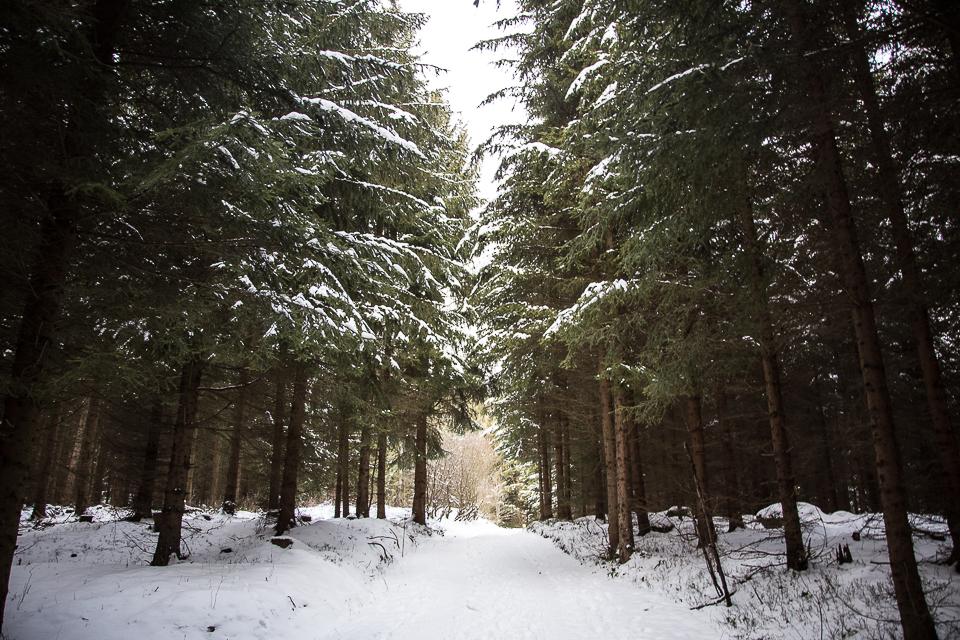 Winterspaziergang 002