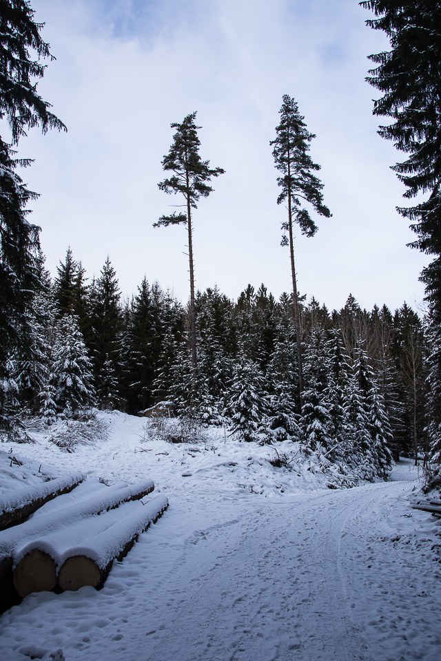Winterspaziergang 003
