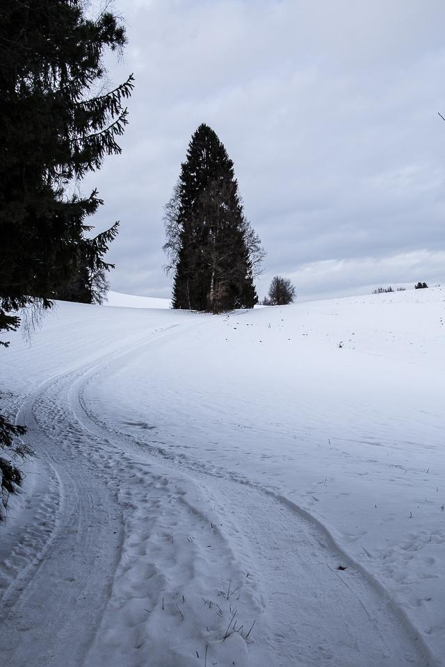 Winterspaziergang 006