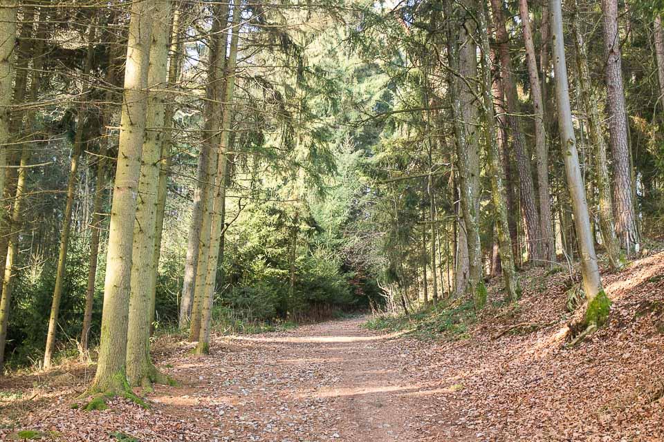 Spaziergang St. Peter bei Freistadt-4