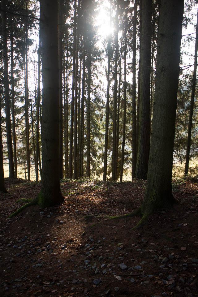 Spaziergang St. Peter bei Freistadt-5
