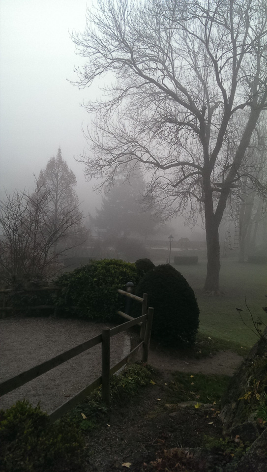 Nebelspaziergang (c) FloraFellner-1