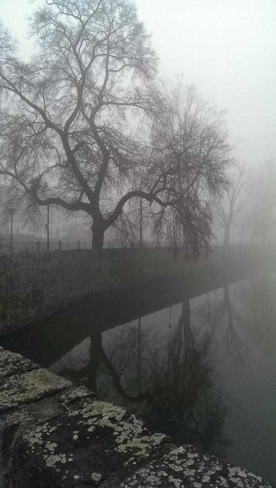Nebelspaziergang (c) FloraFellner-11