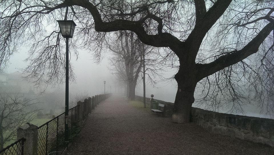 Nebelspaziergang (c) FloraFellner-13