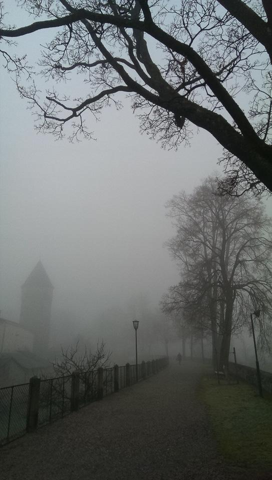 Nebelspaziergang (c) FloraFellner-14