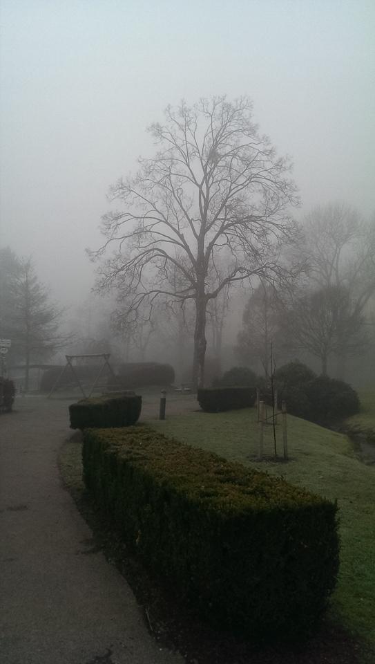 Nebelspaziergang (c) FloraFellner-4