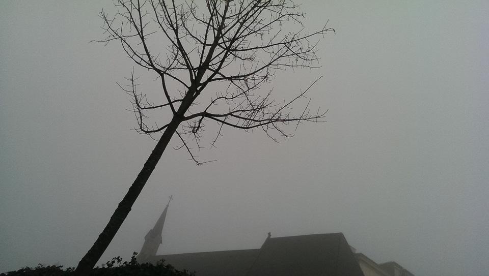 Nebelspaziergang (c) FloraFellner-5