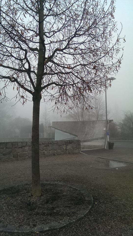 Nebelspaziergang (c) FloraFellner-9
